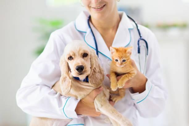 Σπουδές Κτηνιατρικής στην Πολωνία – Αγγλόφωνο Πανεπιστήμιο